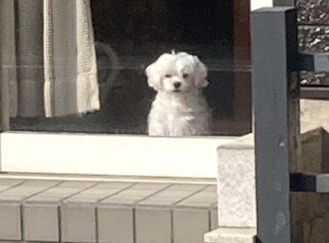 犬とバランス⚖
